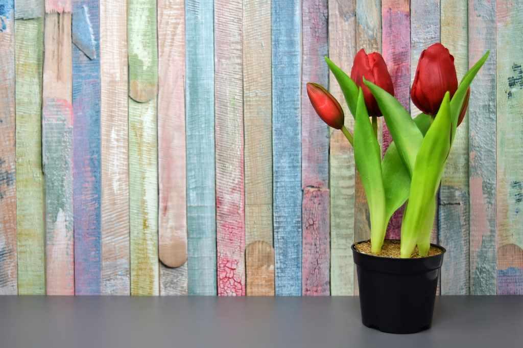 цветы для педагогов