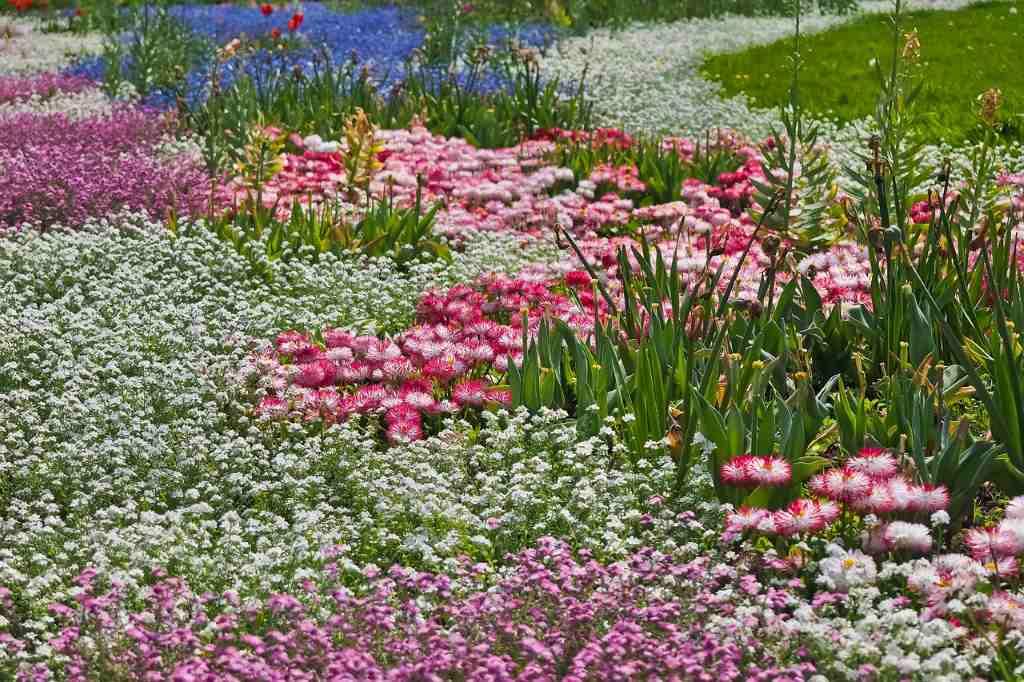 цветы-в-парке