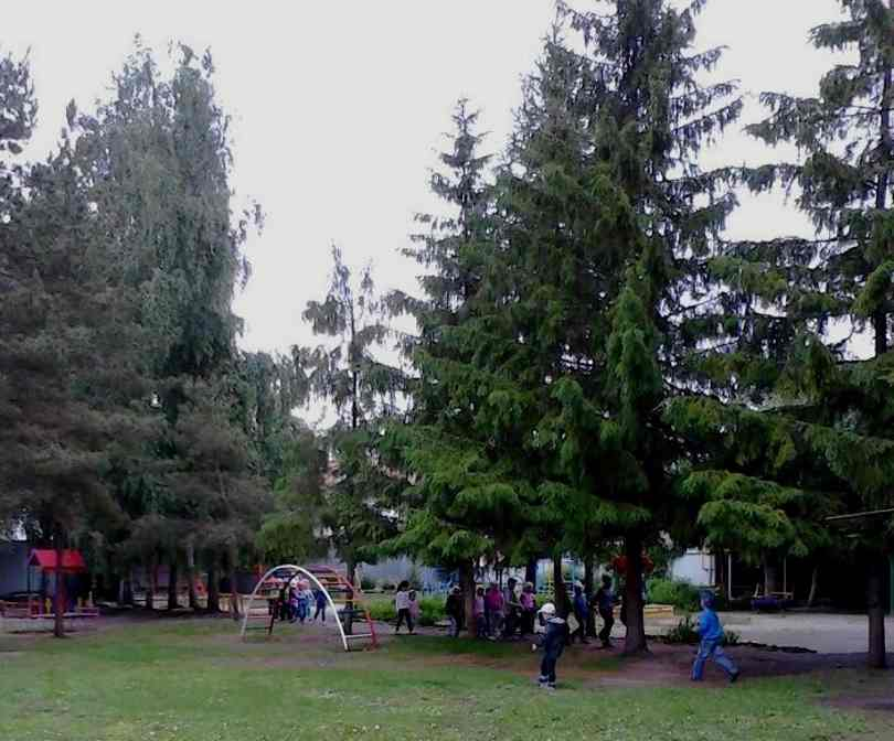 знакомим дошкольников с деревьями