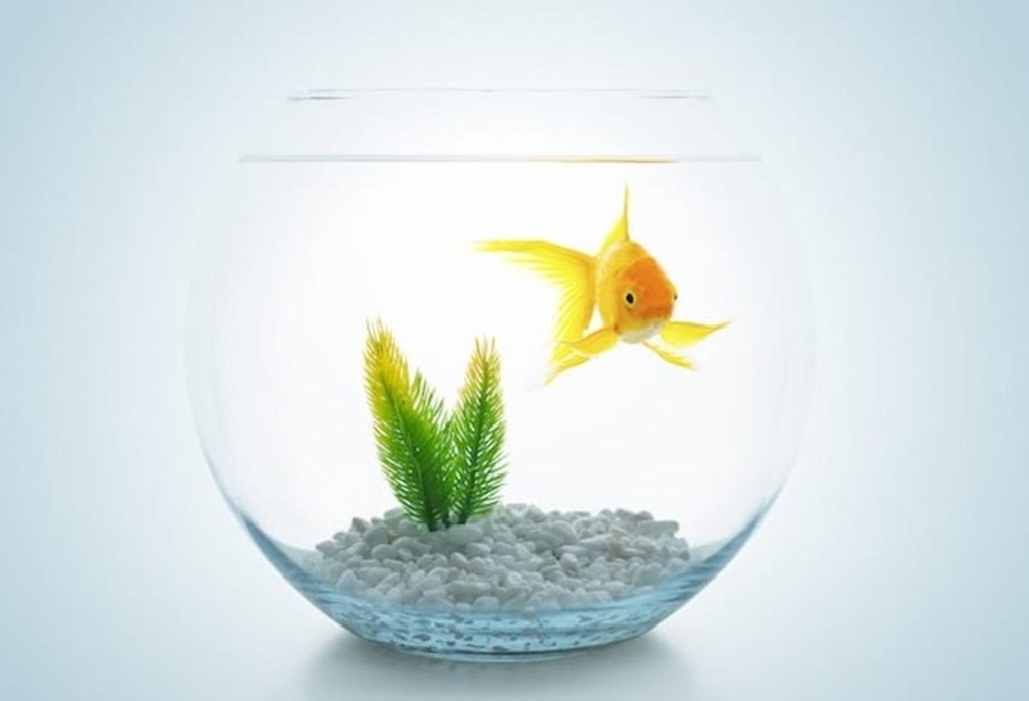 metod-akvarium-kak-vovlech-kazhdogo-uchenika-v-diskussiyu